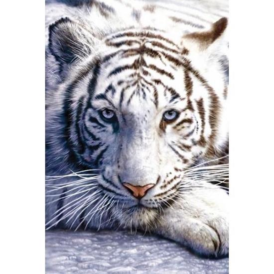 Afbeeldingen Witte Tijgers