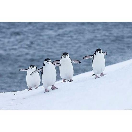 Feest versiering pinguins poster